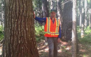 Todd in an old Maine stand of white pine and red spruce